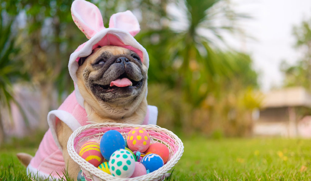 Pes s košíkem vajec posílá velikonoční textová přání.