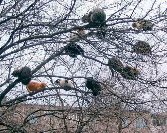 Legrační obrázek s kočičkami na stromě.